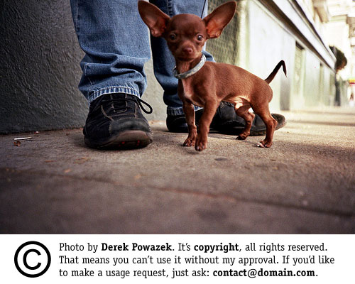 Derek's Dog